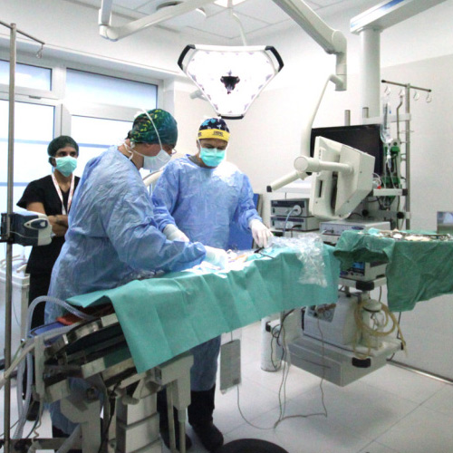 Endoscopia e chirurgia mini-invasiva per il cane e per il gatto