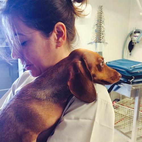 STERILIZZAZIONE IN LAPAROSCOPIA cane e gatto