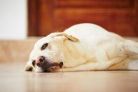 Avvelenamento cane gatto veterinario Roma